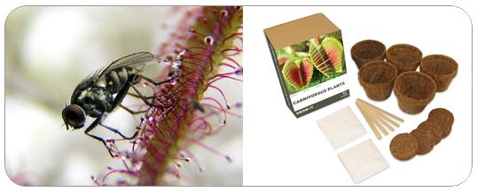 Kit Plantes Carnivores