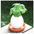 Eglling, la plante dans un oeuf